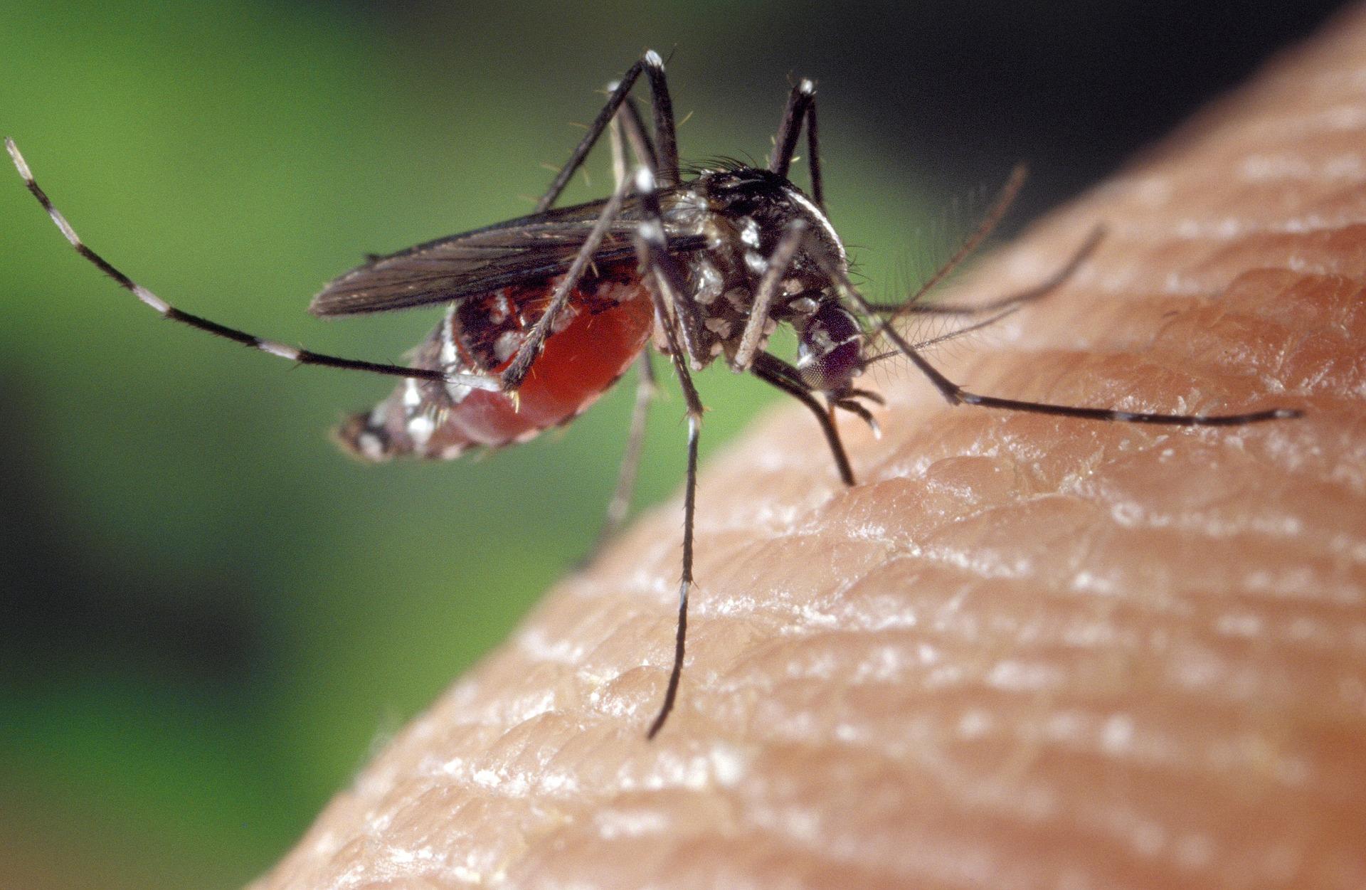 Situation de la Dengue à Mayotte